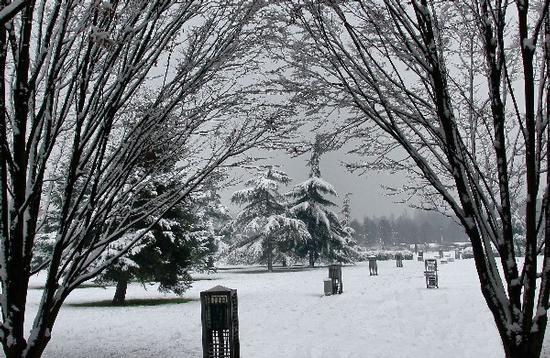 Mestre. Neve al parco (3588 clic)