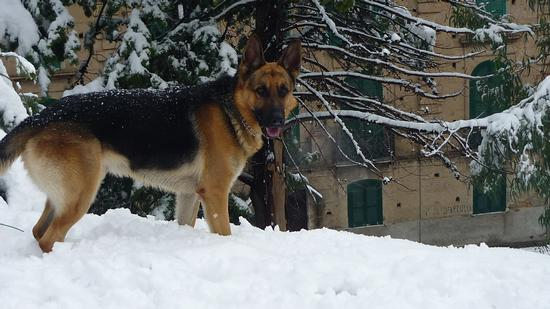 A noi piace la neve - Rossano 16.12.2010 (2259 clic)