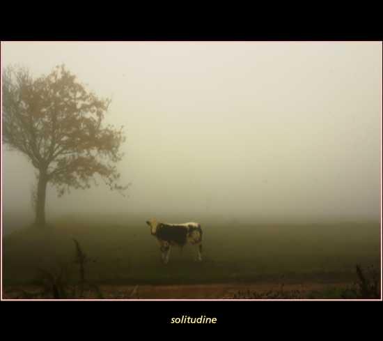 solitudine nella nebbia - Piossasco (1934 clic)