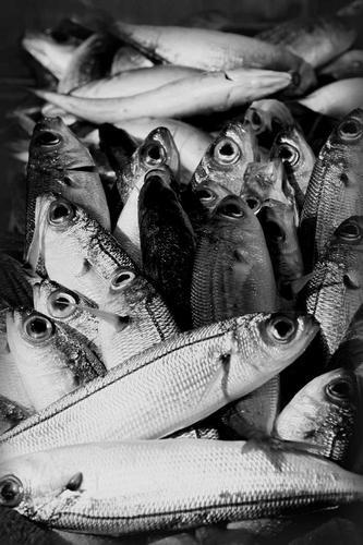 pesci - Palermo (3169 clic)