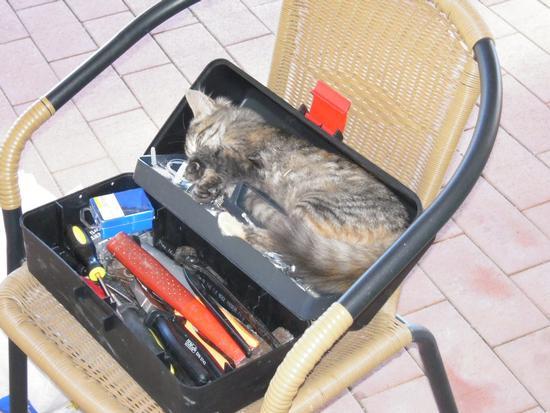 Gattina che dorme in una cassetta di attrezzi - Roccagloriosa (1912 clic)