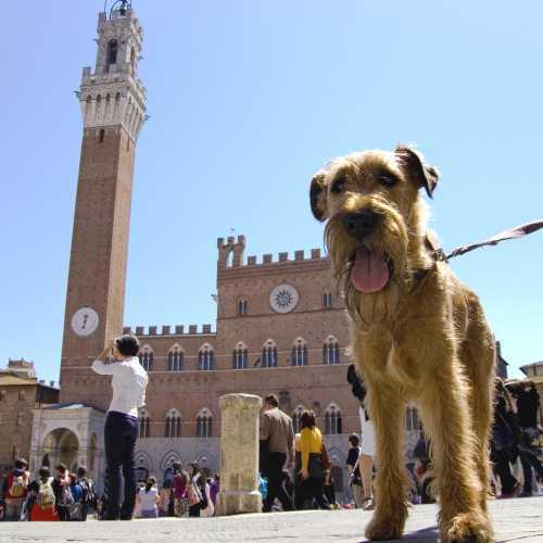 Cane a Piazza del Campo - Siena (2618 clic)