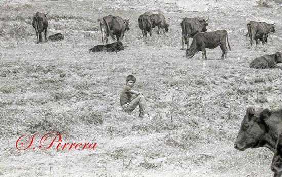 Mercato Boario 1982 - Capizzi (106 clic)