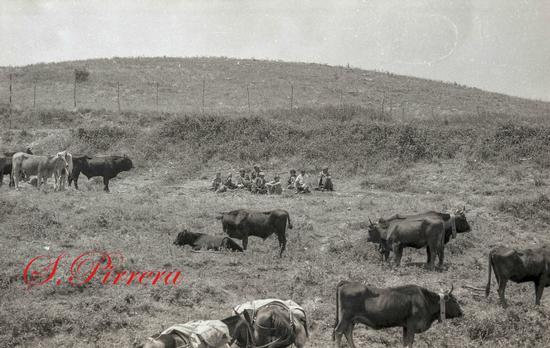 Mercato Boario 1982 - Capizzi (86 clic)