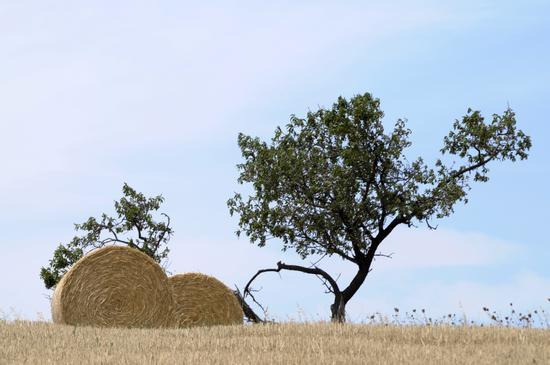 Balle d'estate - San cataldo (1036 clic)