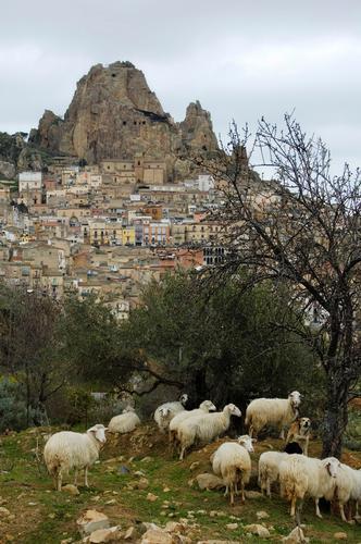 PANORAMA Bucolico - Gagliano castelferrato (3572 clic)
