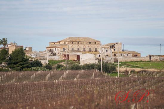 Ciccobriglia - Campobello di licata (138 clic)