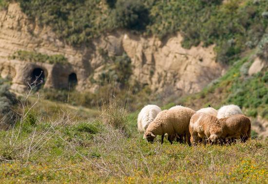 Pecore - Bompietro (360 clic)