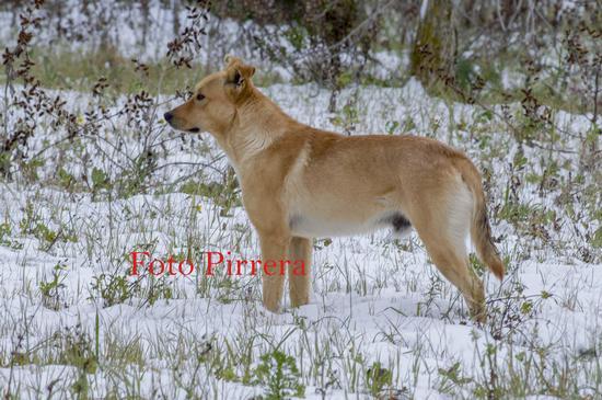 Il Cane e la Neve - Atessa (197 clic)