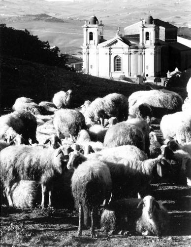 PANORAMA Bucolico - Serradifalco (3973 clic)