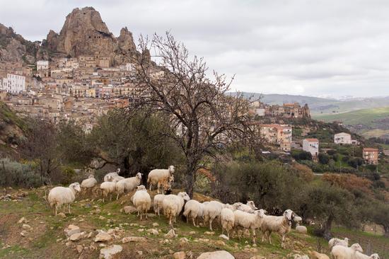 Panorama - Gagliano castelferrato (253 clic)