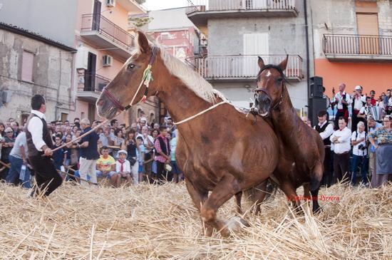 Festa del Grano - Raddusa (515 clic)