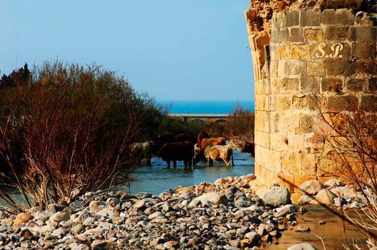 Ponte Romano - Caronia (3640 clic)