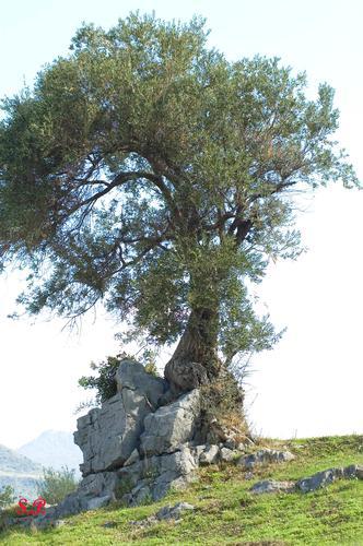 SPACCAPIETRE - Castelbuono (3787 clic)