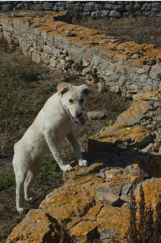 Sophiana e il cane archeologo (I parte) (3211 clic)
