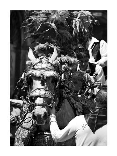 Festa di san Alfio - Mascalucia (2559 clic)