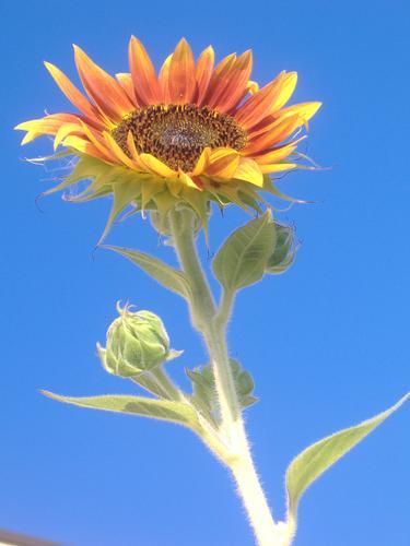 seguendo il sole - Casalmaggiore (1533 clic)