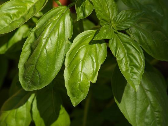 aromi d'estate - Casalmaggiore (1523 clic)