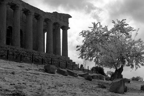 Agrigento (2647 clic)