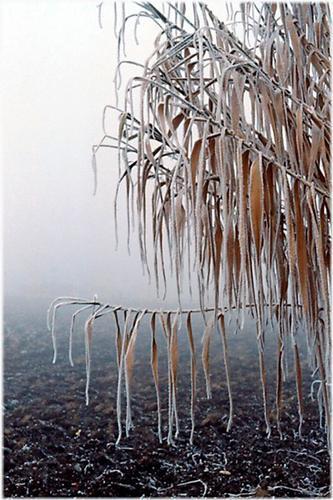 è arrivato l'inverno - Caselle (2173 clic)