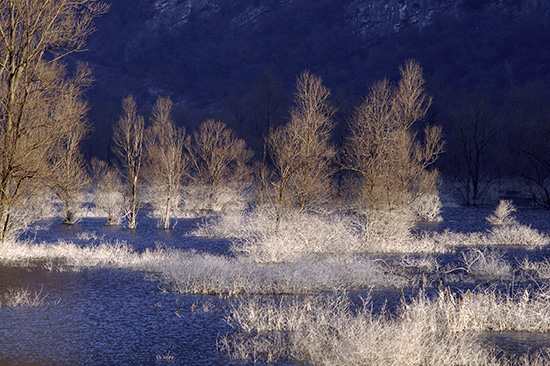il lago di Loppio in un mattino d'inverno - Mori (4766 clic)