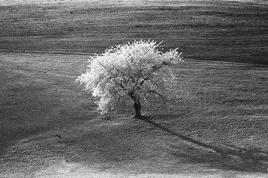 autunno in scala di grigi - Sant'anna d'alfaedo (2611 clic)