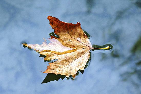 autunno nel laghetto Squarà - Montorio veronese (2310 clic)