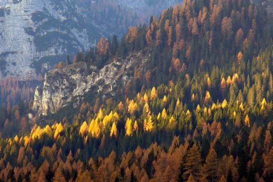 i colori dell' Alpago - Misurina (2250 clic)