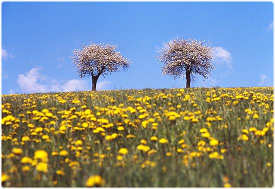 primavera in montagna - Erbezzo (2683 clic)
