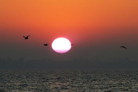 gabbiani nel sole - Pacengo (2580 clic)