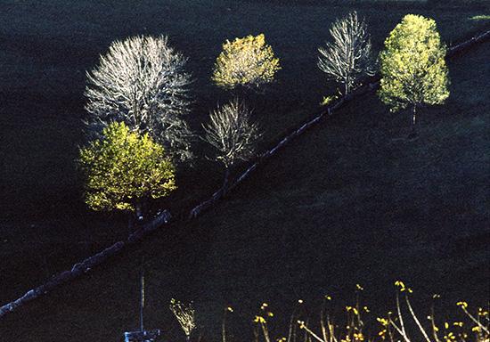 Chiome baciate dal sole d' autunno. - Erbezzo (1223 clic)