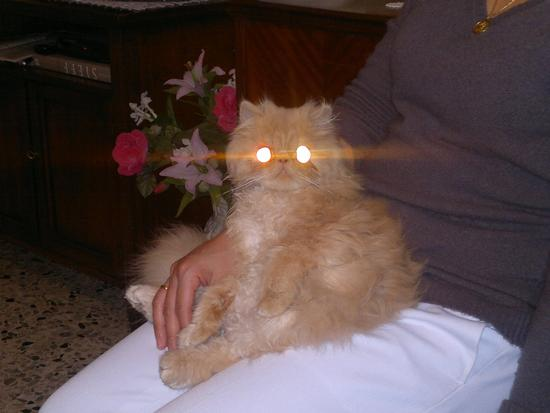gatto galattico - Quarto d'altino (2575 clic)