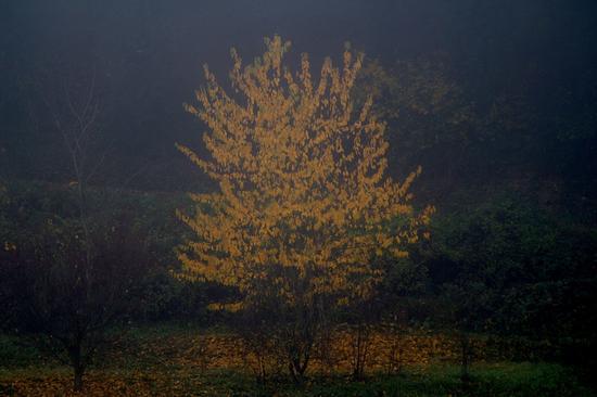 l'albero fatato (632 clic)