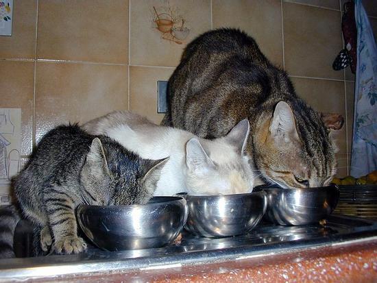 che amore di gatti (1527 clic)