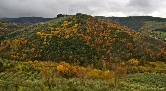autunno umbro (481 clic)