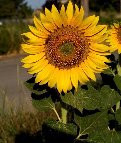 un bellissimo fiore - Bettona (2742 clic)