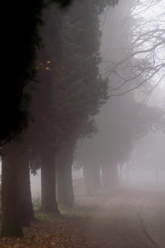 il fascino della nebbia - Bettona (2245 clic)