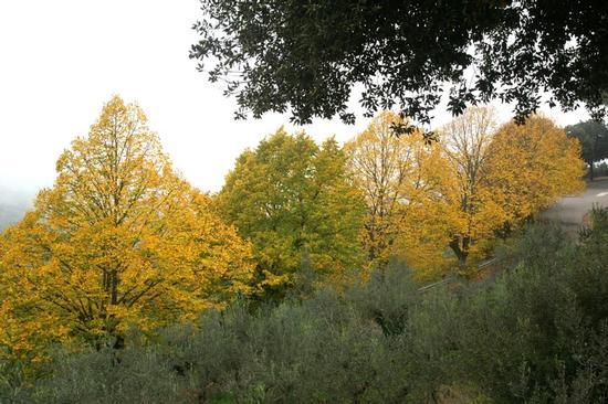 dolce autunno  - Bettona (2274 clic)
