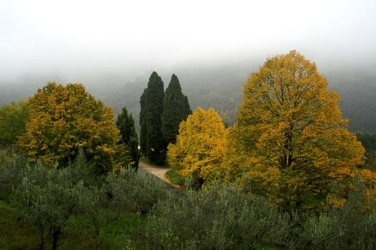 caldo autunno - Bettona (2508 clic)