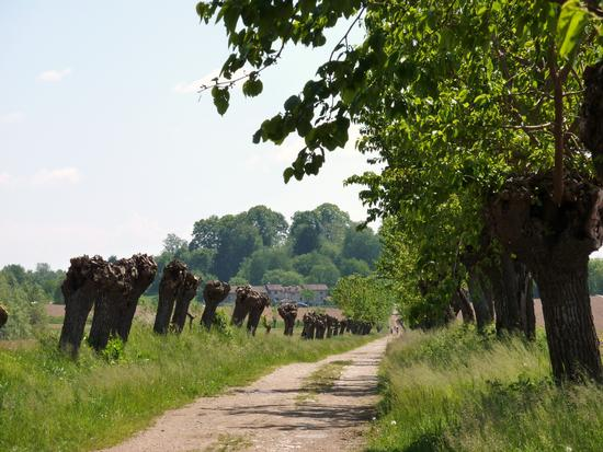una bella camminata da Ara Grande a Fontanabona (2602 clic)