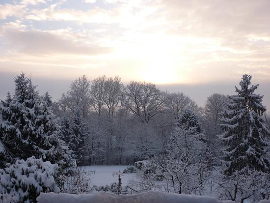 dicembre 2010 - Ara grande (2087 clic)
