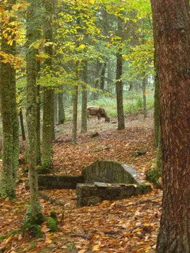 Foresta Monte Pisano - Bono (2427 clic)