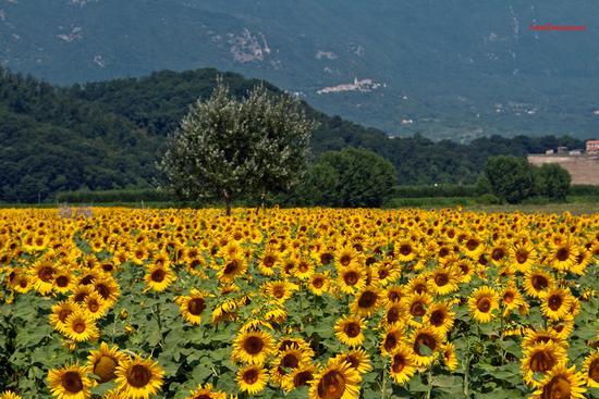 La Valle Santa. - Rieti (1053 clic)