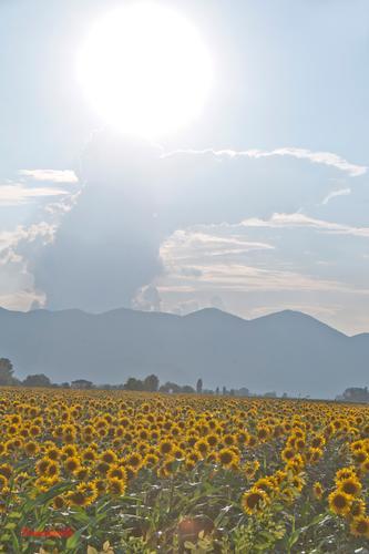 La Valle Santa Reatina. - Rieti (797 clic)