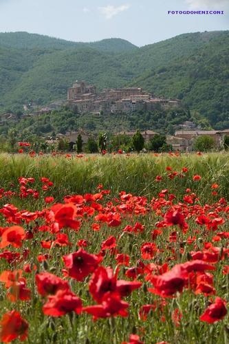 Sulle orme di San Francesco - Contigliano (616 clic)