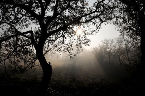 l'alba tra i boschi - Pratola serra (3468 clic)