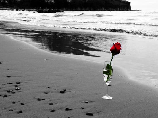 ... rosa di mare - Agropoli (1608 clic)