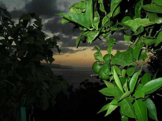 arance...al tramonto - Scilla (2755 clic)