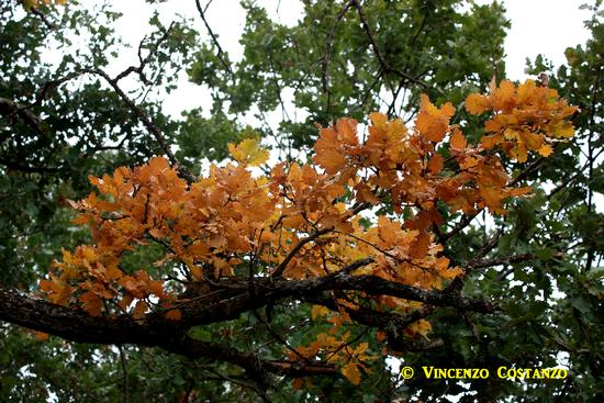 Foglie d'autunno - Maniace (2034 clic)