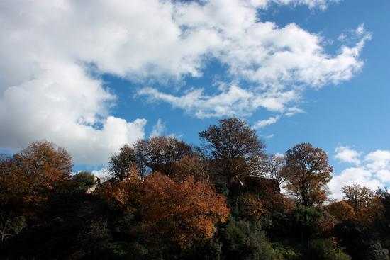 Maniace: I colori dei Nebrodi (2369 clic)